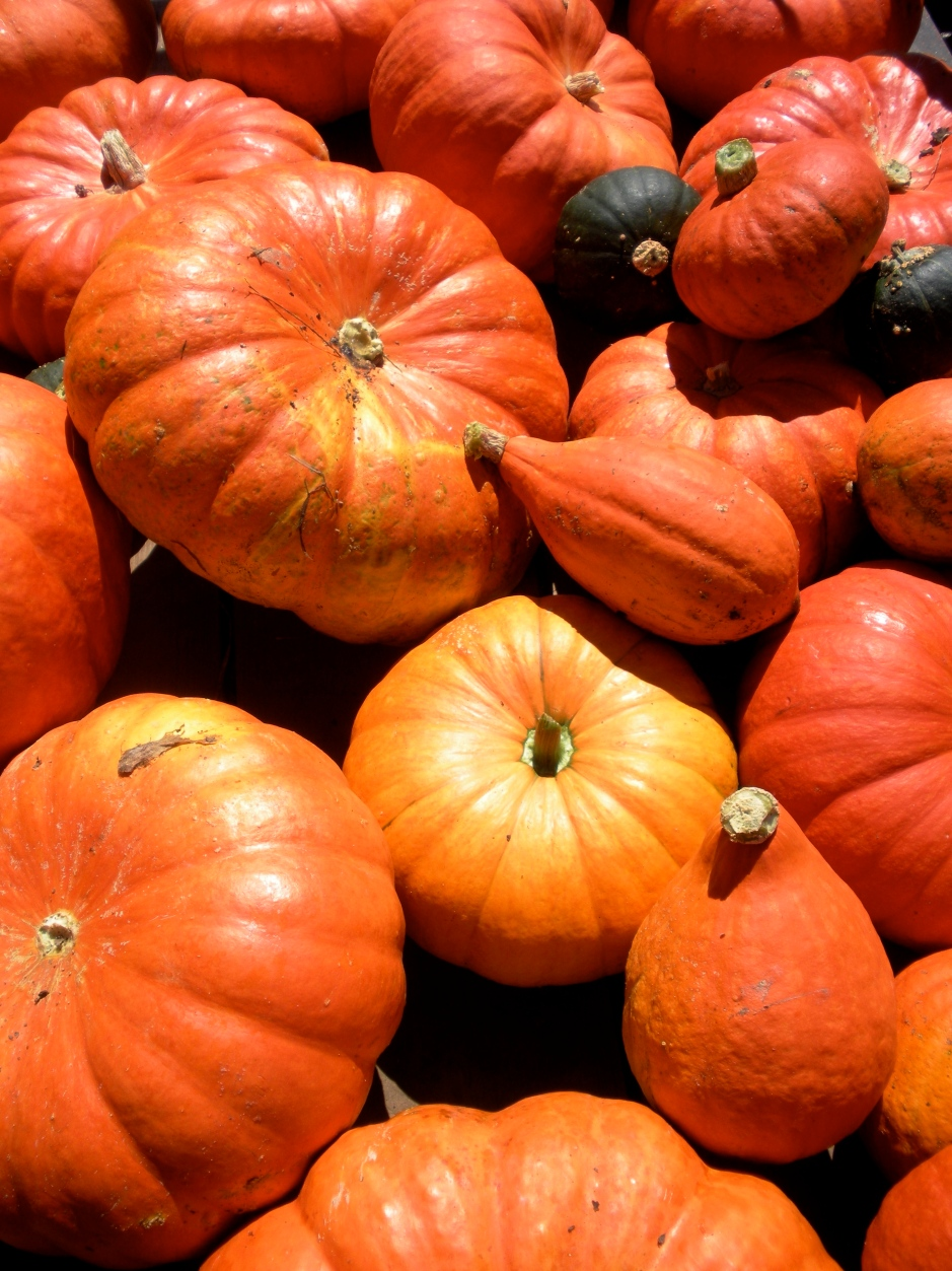 The pumpkins are here and will soon be in your kitchen!