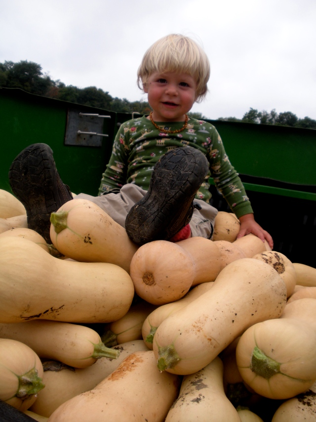 Little River supervises the butternut squash harvest. (September 10, 2013, A.Gross)