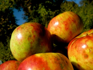 We'll have delicious apples from Hidden Brook Gardens. Bonus: They're certified organic!